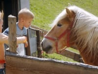 Zwergerlhof - Auf dem Bild ist eines unserer Pferde, Norbsi genannt