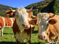 freundliche Milchlieferanten
