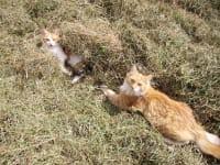 Katzen im Heu