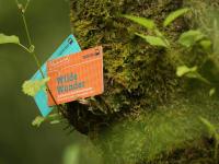 Wilde Wundercard
