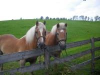 Sandor u. Gritta die Pferde vom Bauernhof Kurzeck