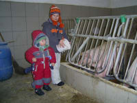 Die Kinder beim Schweinefüttern