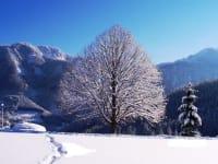 Linde Winter