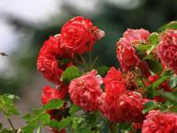 Impressionen aus dem Garten