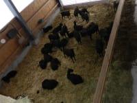 Unsere neuen Tiere am Hof