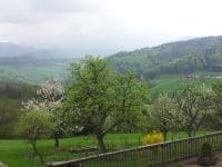 Hirmhof - Frühling und Obstblüte