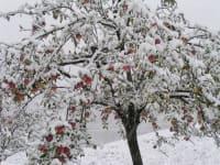 verfrühter Wintereinbruch