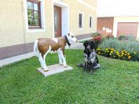 neuer Hund `Semi`