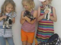 Katzenfreundschaften