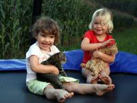 Trampolin und Katzen