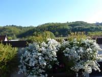 Familie Bauer - Blütenpracht