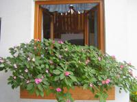Fensterln im Stiegenhaus