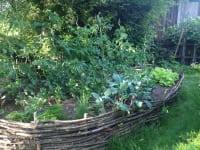 Hochbeet aus Weiden mit viel Gemüse
