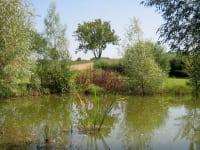 Weidenspielplatz im Sommer