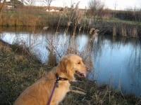 Teich Weidenspielplatz