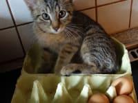 da sind ja noch 3 Eier