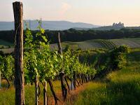weite Landschaft mit Blick auf Burg Kreuzenstein