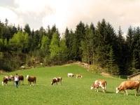 Andrea bei ihren Tieren auf der Weide
