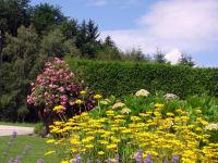 Unser Hausgarten ist eine Oase für viel Insekten