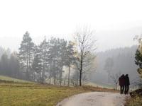Biohof Besenbäck - Ideal für Herbstspaziergänge