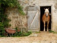 Biohof Besenbäck - Pferdedame Sheila