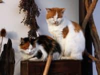Biohof Besenbäck - Die Katzen führen sich offensichtlich wohl