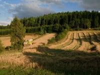 Biohof Besenbäck - Der Mähdrescher bei der Ernte