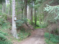Beim Wandern in Waldviertler Wäldern findet man Ruhe und Gelassenheit