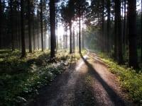 Durch den Wald zum Bauernhof