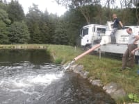 Teich - Forellen einsetzen