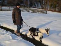Spaziergang mit unserer zahmen Ziege