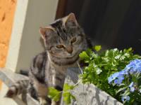 Mogli mit den Frühlingsblühern