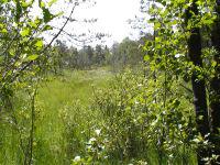Impressionen vom Ibmer Moor