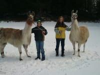 Unsere beiden Lamas: AMADEUS und AMERIES