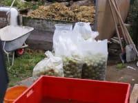 Obst fürs Einmaischen