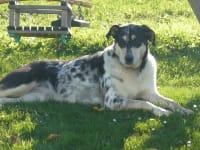 Hofhund Tina