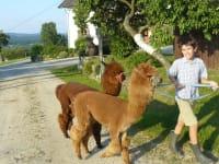 Lorenz mit Momo und Boris