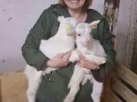 Ziegenmama Silvia mit den kleinen Kitzen
