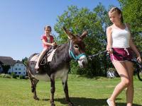 Eselreiten auf Sissi