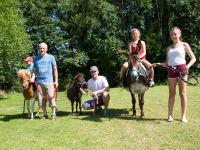 Pony Cindy, Minishetty Moritz und Esel Sissi