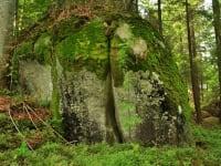 In unseren Wäldern gibt es viel zu Entdecken!