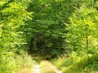 Auf den vielen Wanderwegen in unserer Region können Sie die Natur genießen!