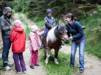 Am Ponyrücken geht das Wandern gleich viel leichter!