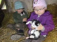 Kuscheln mit den kleinen Babykatzen