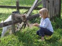 Ziegen fütten