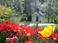Tulpenblüte mit Kapelle
