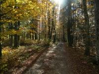 Farbspiele im Herbst