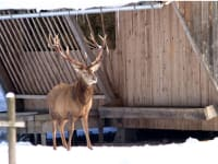 WALDNESS-Cumberland-Wildpark