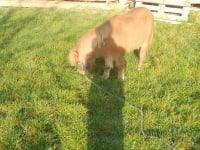 Ponymutter Nicki