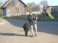 Ponyvater Bencho